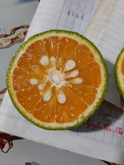 Cam Sành Bình Tân