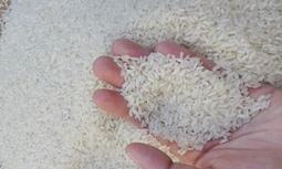Gạo Tám Hải Hậu
