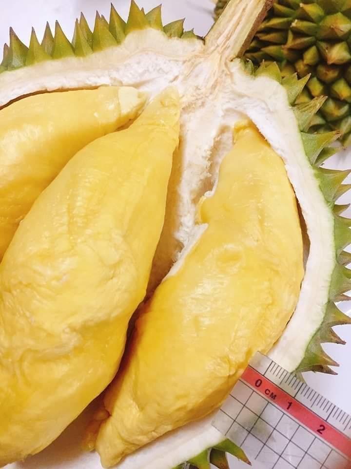 Sầu Riêng