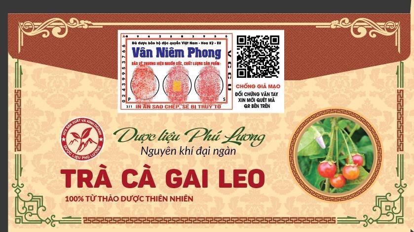 Trà Cà Gai Leo Hỗ Trợ Chức Năng Gan - Hộp 125g - Dược liệu Phú Lương