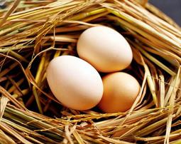 Trứng Gà Con So