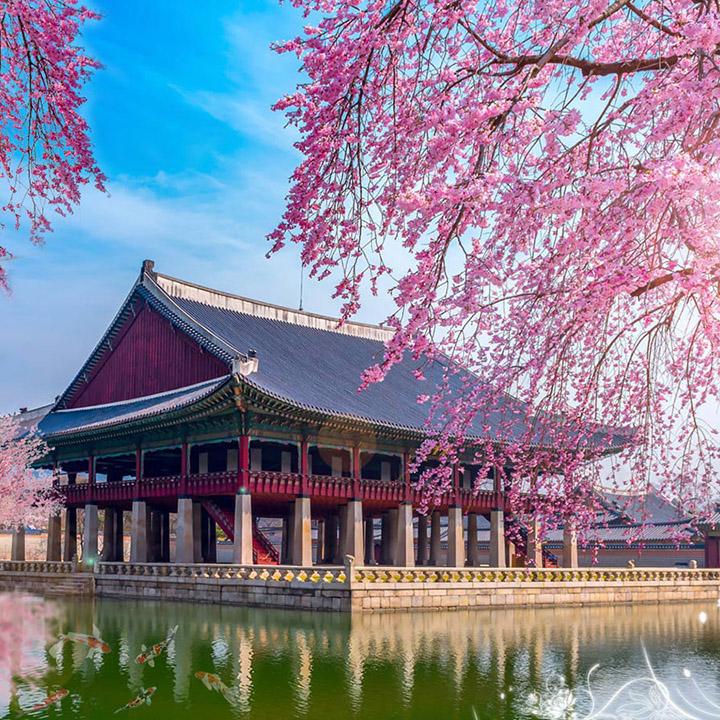 Sim Du lịch Hàn Quốc 100GB 4G (7 ngày)