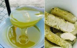 1 lít mật ong bạc hà