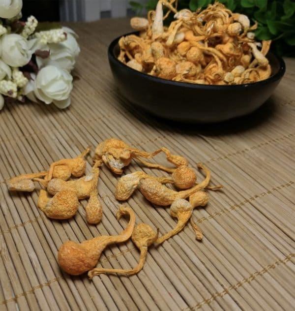 300g Nấm Bao Tử Đông Trùng Hạ Thảo