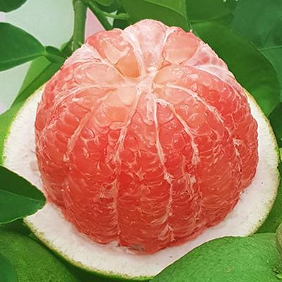 Bưởi da xanh Tiền Giang (2 quả)- Bưởi loại 1
