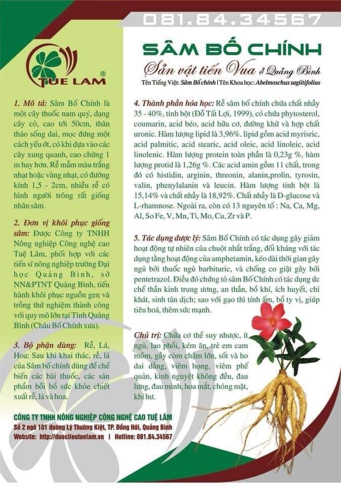 Sâm Bố Chính Quảng Bình - Sản vật tiến Vua Loại I (8-12củ)