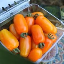 Cà chua sữa Đà Lạt (1kg)