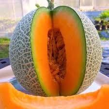 Hạt giống Dưa lưới ruột cam Thái Lan- gói 0.5gr