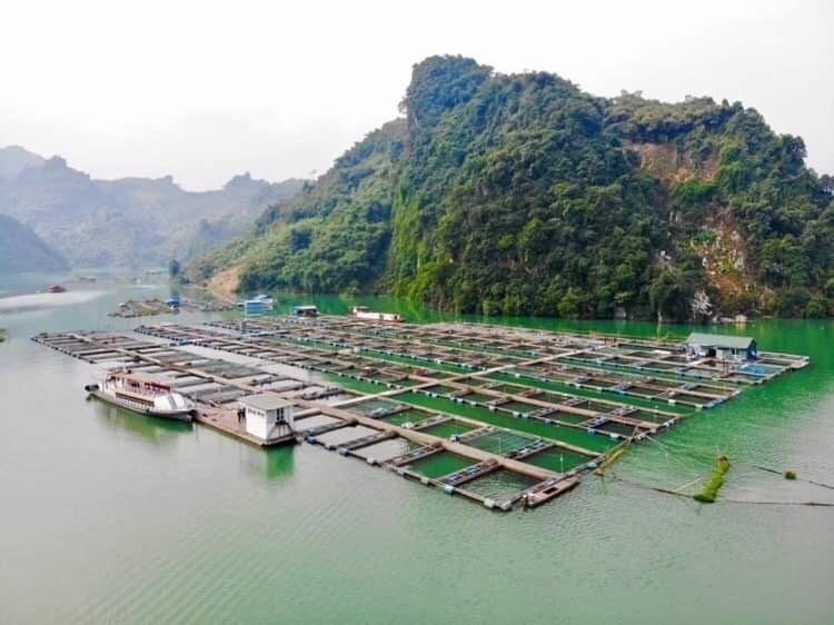 Ruốc Cá Trắm Đen Sông Đà SP OCOP 4 Sao - Chỉ 180.000Đ/Hũ (100g)r