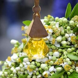Tinh dầu treo xe hương Hoa Bưởi - khử mùi hôi - Hơn cả sự đẳng cấp!