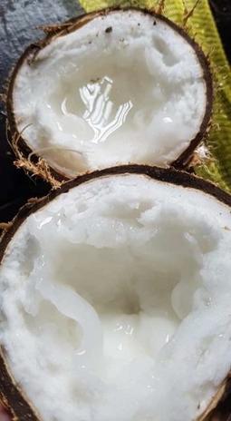 Dừa Sáp Đặc Ruột loại 1