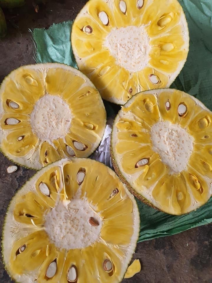 Mít Thái