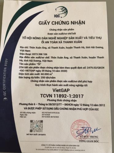 ỔI VIETGAP THANH HÀ (hộp 5kg)