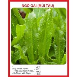 Hạt giống Ngò Gai (mù tàu) 2gr
