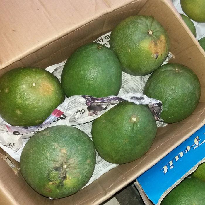 Combo 10 quả bưởi da xanh Tiền Giang (loại ăn ngon)